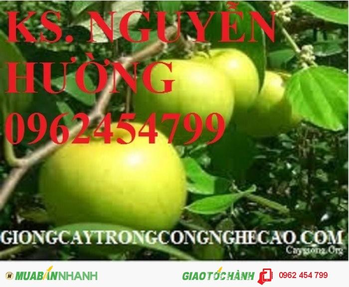 Chuyên cung cấp giống táo ngọt h12 chất lượng cao1