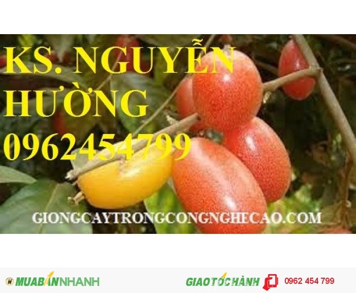Chuyên cung cấp giống nhót ngọt chất lượng cao3