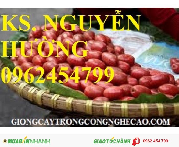 Chuyên cung cấp giống nhót ngọt chất lượng cao4