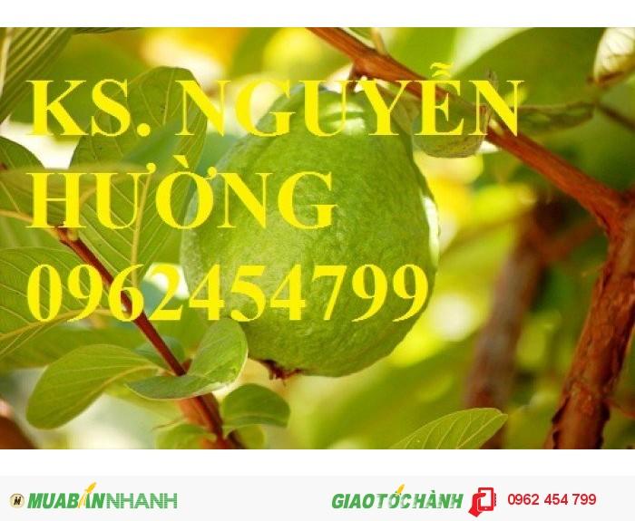Chuyên cung cấp giống cây ổi lê đài loan chất lượng cao1