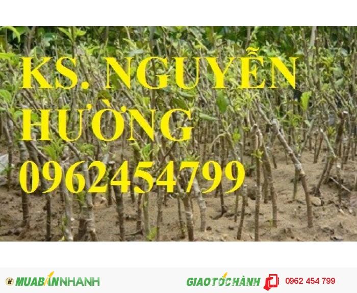 Chuyên cung cấp cây giống táo đào vàng uy tín, chất lượng2