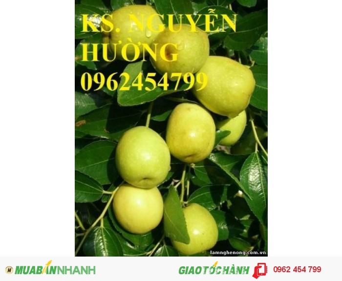 Chuyên cung cấp cây giống táo đào vàng uy tín, chất lượng0