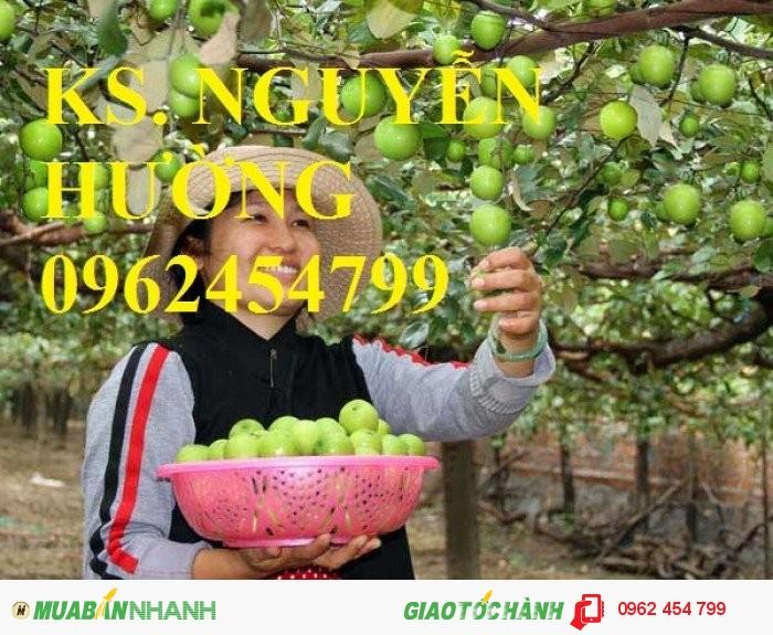 Chuyên cung cấp cây giống táo đào vàng uy tín, chất lượng3