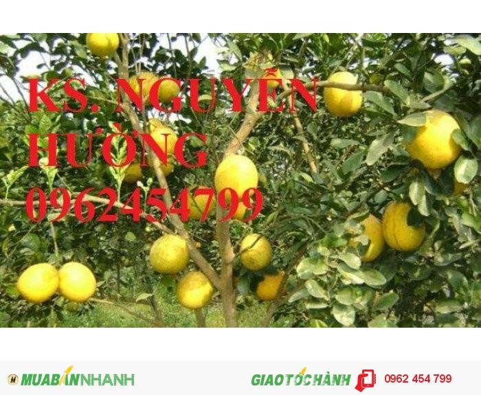 Chuyên cung cấp cây giống táo đào vàng uy tín, chất lượng4