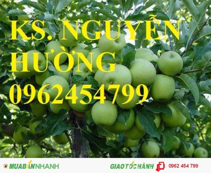 Chuyên cung cấp giống táo đại chất lượng cao0