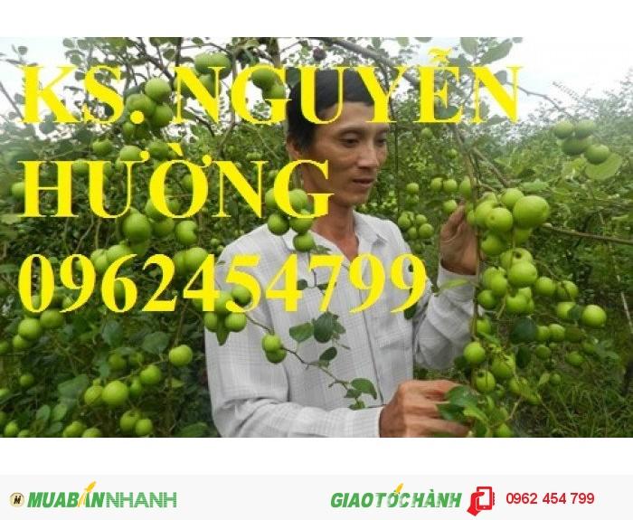 Chuyên cung cấp giống táo đại chất lượng cao1