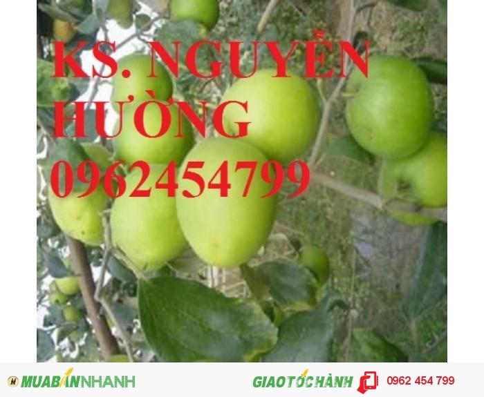 Chuyên cung cấp giống táo đại chất lượng cao2