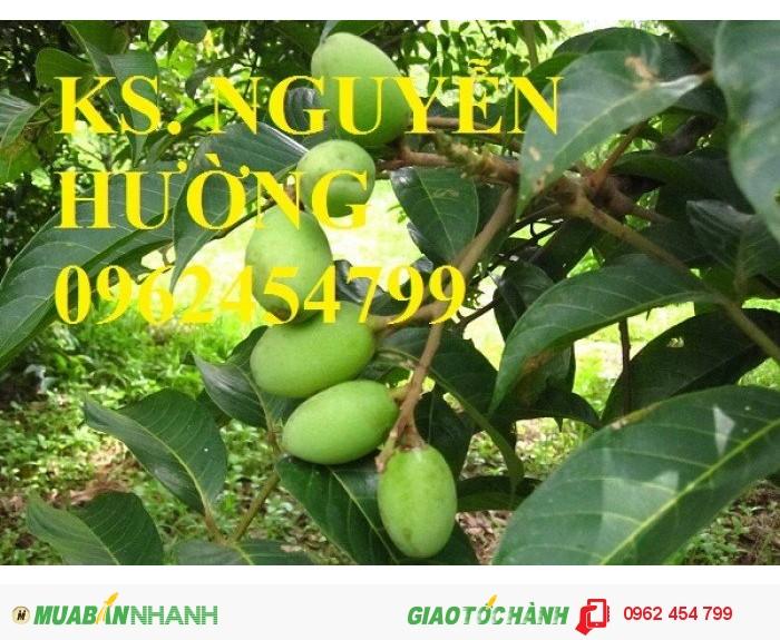 Chuyên cung cấp giống cây trám trắng chất lượng cao2