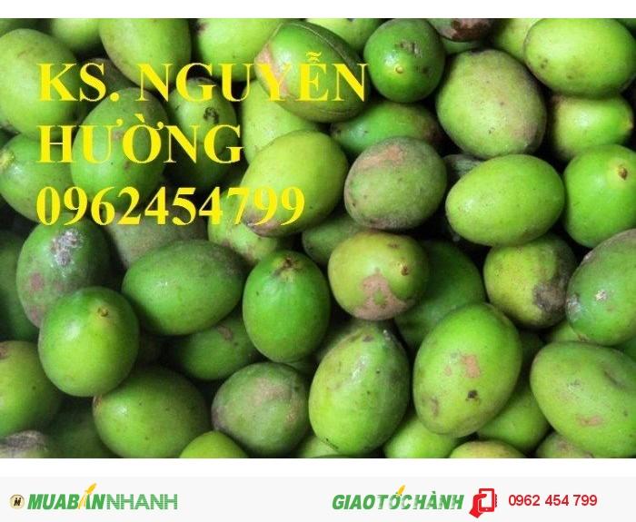 Chuyên cung cấp giống cây trám trắng chất lượng cao3