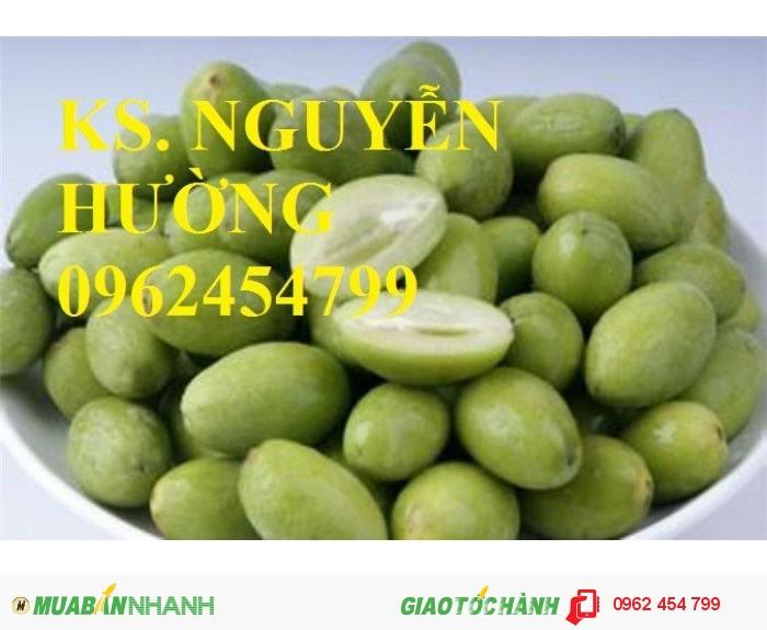 Chuyên cung cấp giống cây trám trắng chất lượng cao4