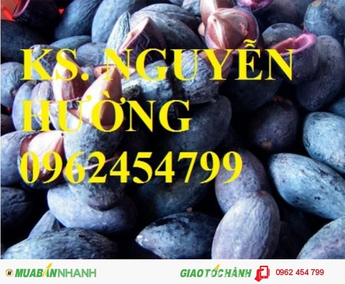 Chuyên bán giống cây trám đen chất lượng cao3