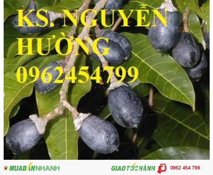 Chuyên bán giống cây trám đen chất lượng cao0