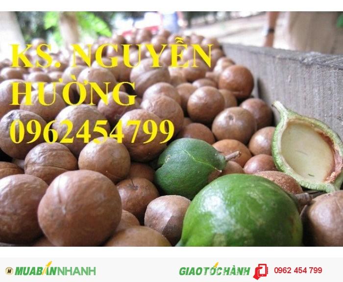 Chuyên cung cấp giống cây mắc ca (macca) uy tín, chất lượng2