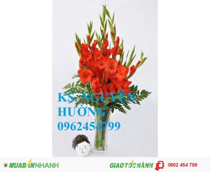 Chuyên cung cấp củ giống, cây giống hoa lay ơn (hoa dơn) uy tín, chất lượng0