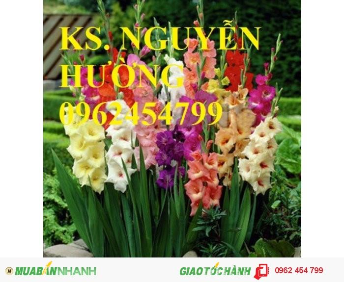 Chuyên cung cấp củ giống, cây giống hoa lay ơn (hoa dơn) uy tín, chất lượng1