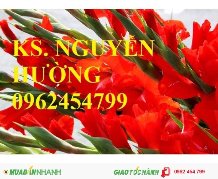 Chuyên cung cấp củ giống, cây giống hoa lay ơn (hoa dơn) uy tín, chất lượng2