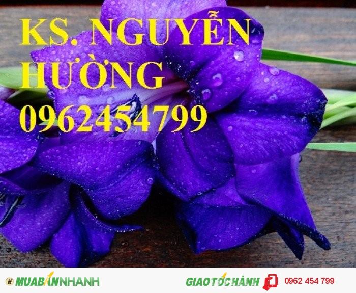 Chuyên cung cấp củ giống, cây giống hoa lay ơn (hoa dơn) uy tín, chất lượng3