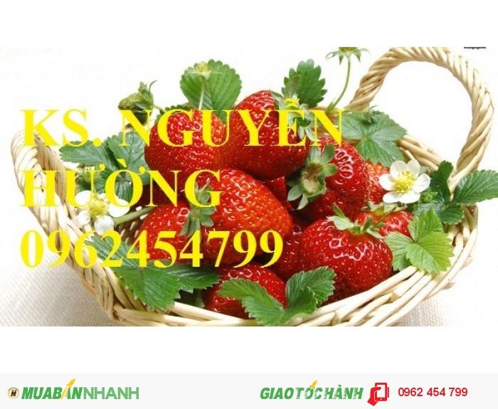 Chuyên cung cấp giống cây dâu tây uy tín, chất lượng1