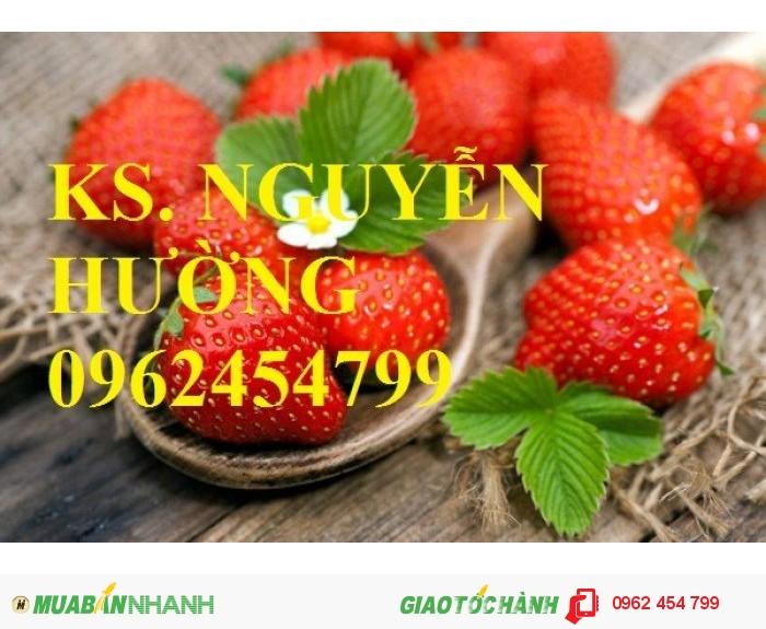 Chuyên cung cấp giống cây dâu tây uy tín, chất lượng2