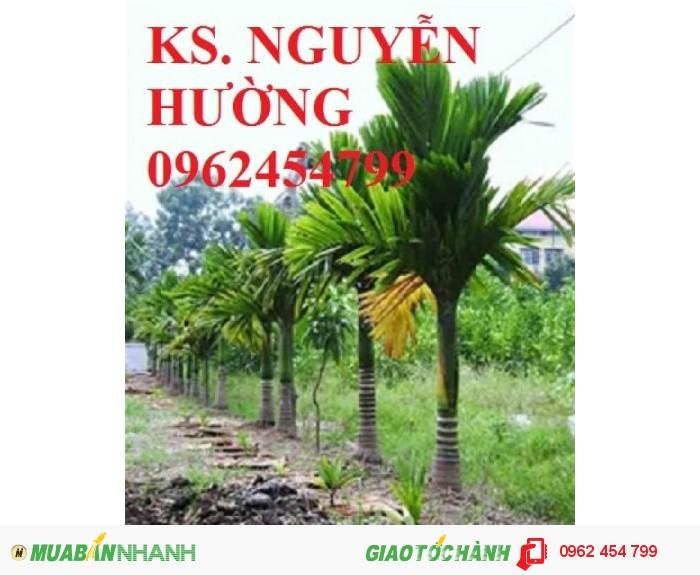 Chuyên cung cấp giống cây cau lùn tứ quý uy tín, chất lượng2
