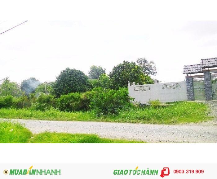 Bán đất xây xưởng, nhà vườn 1000m2, 50x20m giá 1.1 Triệu/m², Hưng Long, Bình Chánh.