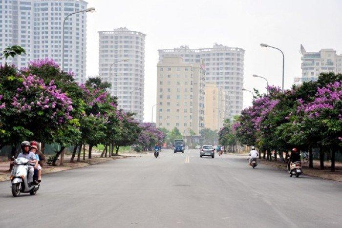 Chuyên cung cấp cây công trình đô thị bằng lăng số lượng lớn chất lượng cao4