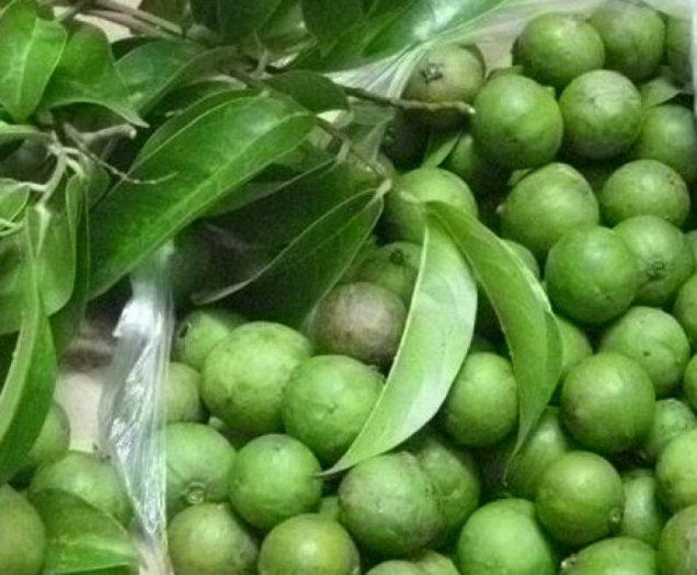 Chuyên cung cấp giống cây các loại: Cau tứ quý, macca(măc ca) tre bát độ, sa kê, sấu, số lượng lớn, uy tín, chất lượng đảm bảo4