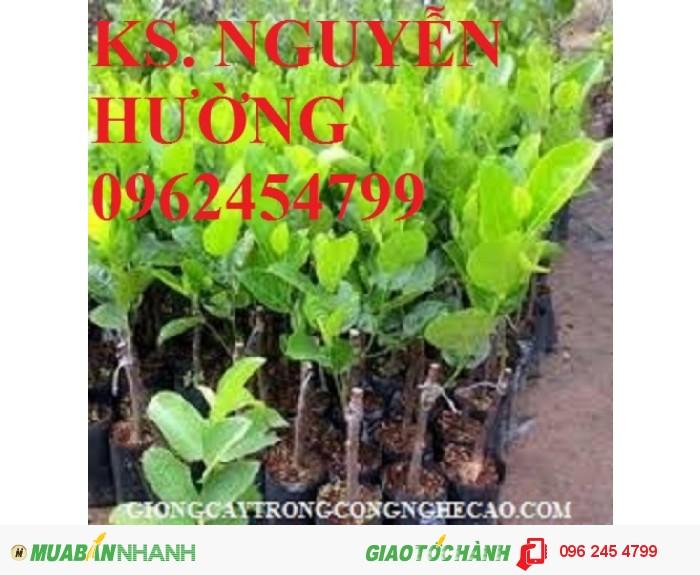 Chuyên cung cấp giống cây mít thái siêu sớm, mít tố nữ, mít ruột đỏ, mít không hạt, mít nghệ tứ quý, mít viên linh1
