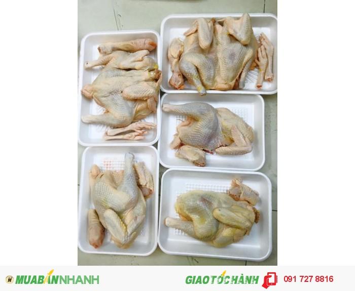 Gà mái dầu Tây Ninh