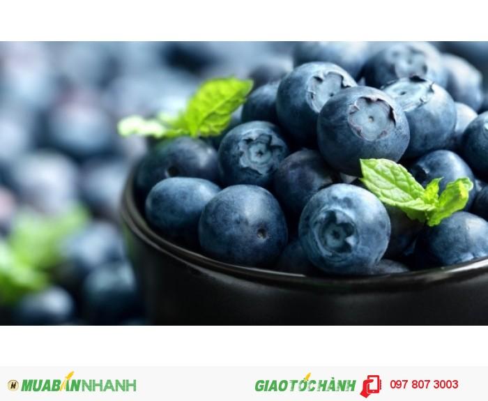 Chuyên cung cấp cây giống việt quất ( sim úc) chuẩn giống, uy tín, chất lượng0
