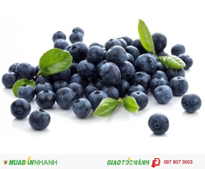 Chuyên cung cấp cây giống việt quất ( sim úc) chuẩn giống, uy tín, chất lượng4
