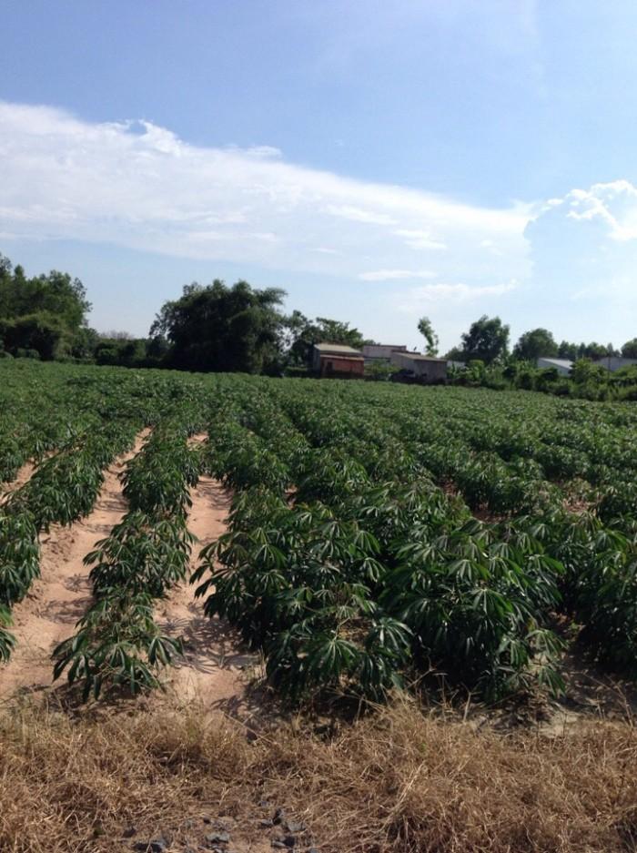 Cần bán gấp 1010m2 đất ngay trung tâm Vĩnh Thanh, Nhơn Trạch,Đồng Nai giá cực rẻ
