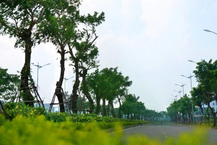 Bán đất khu sinh thái Hòa Xuân, đất đẹp giá tốt nhất thị trường