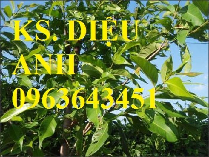Bán cây giống Tre bát độ, Phật thủ, Vối nếp, Hoa hòe đảm bảo chất lượng cây giống0