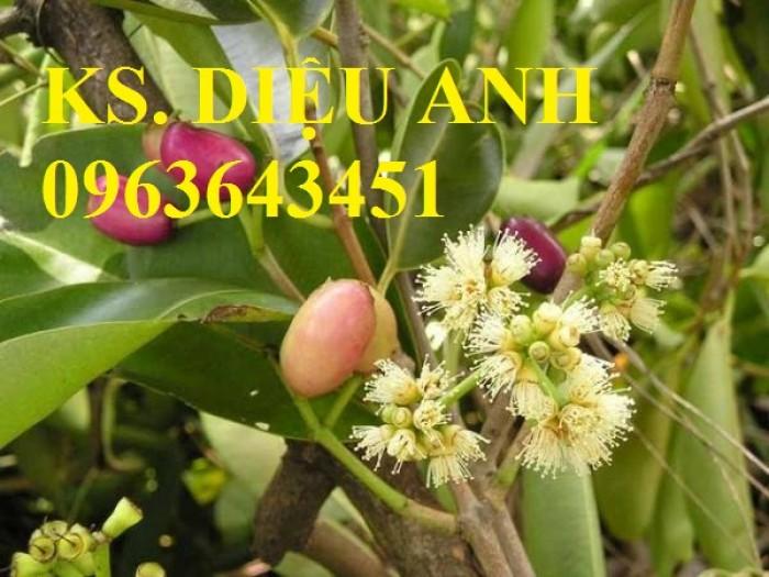 Bán cây giống Tre bát độ, Phật thủ, Vối nếp, Hoa hòe đảm bảo chất lượng cây giống2