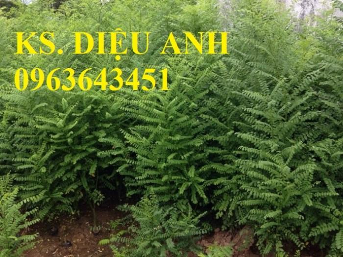 Bán cây giống Tre bát độ, Phật thủ, Vối nếp, Hoa hòe đảm bảo chất lượng cây giống3