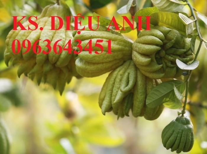 Bán cây giống Tre bát độ, Phật thủ, Vối nếp, Hoa hòe đảm bảo chất lượng cây giống5