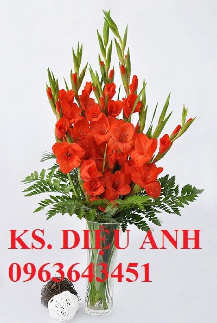 Chuyên cung cấp cây giống, củ giống hoa lay ơn (hoa dơn) số lượng lớn, đủ màu, đủ size, chất lượng đảm bảo1
