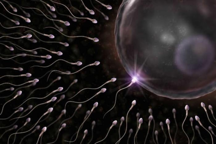 Hàu tam hiệp giúp cải thiện chất lượng tinh trùng