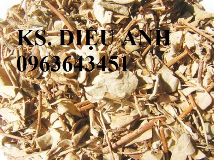 Chuyên hạt giống, củ giống kim tiền thảo số lượng lớn, hoạt chất cao.