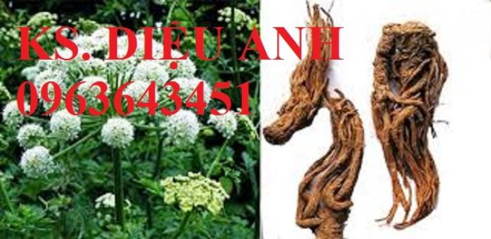 Chuyên cây giống, hạt giống đương quy số lượng lớn, hoạt chất cao, cam kết chất lượng.