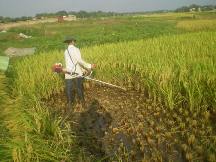 Máy Cắt Cỏ,máy cắt lúa Goodluck GL 2602
