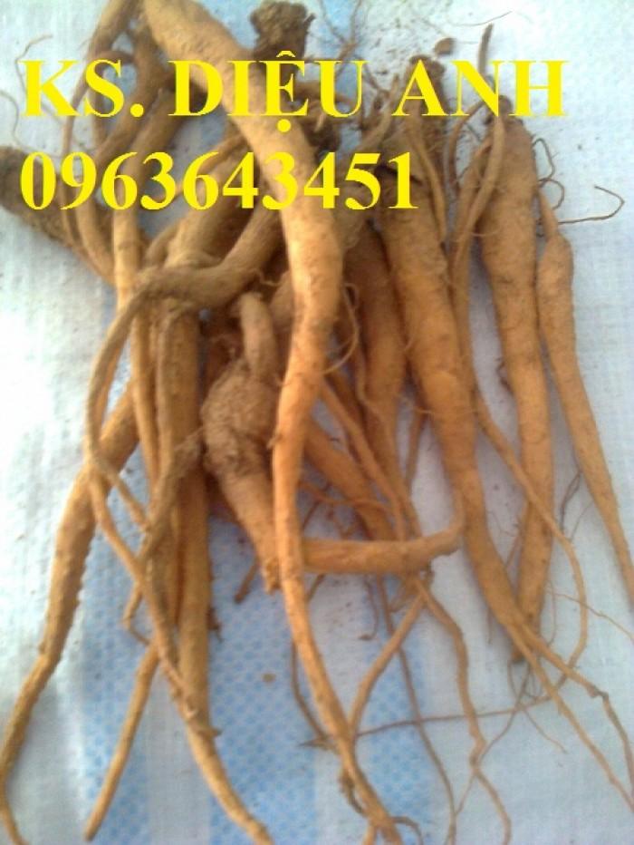 Chuyên cây giống, hạt giống dược liệu:đinh lăng,ba kích,cà gai leo,đẳng sâm,đương quy số lượng lớn, hoạt chất cao