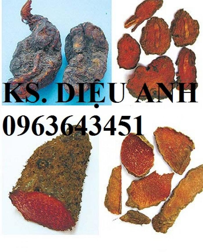 Cây giống, hạt giống dược liệu: Diệp hạ châu, hà thủ ô, kim tiền thảo, xạ đen, dây thìa canh