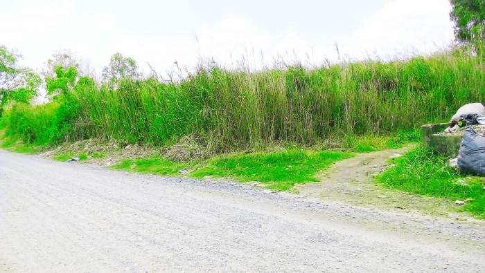 Cần bán 1700m2 đất xây xưởng, nhà vườn Phong Phú, Bình Chánh.