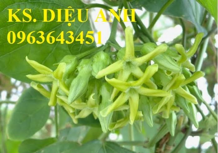 Bán cây giống thiên lý siêu hoa chuẩn F1, uy tín, chất lượng, giao hàng toàn quốc. LH 0963643451