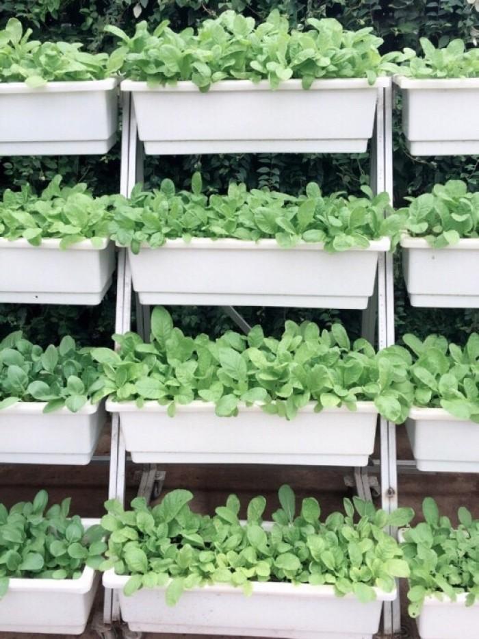 Kệ trồng rau di động 4 chậu