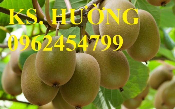 Bán cây giống kiwi (cây ki wi), cây kiwi, giống cây kiwi, kiwi, hạt giống kiwi nhập khẩu chất lượng cao
