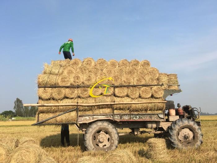 Bán rơm cuộn thức ăn cho bò, trồng nấm, tủ gốc thanh long