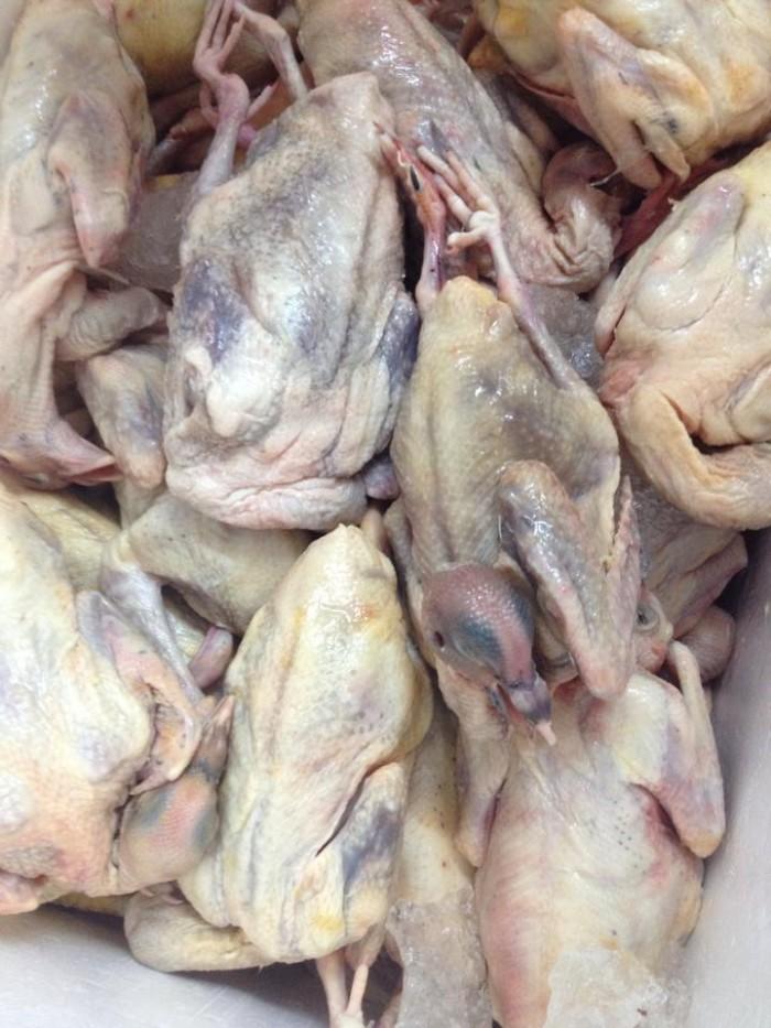 Thịt chim bồ câu loại tươi ngon chim bồ câu, chuyển từ các trang trại tại Nam định , Bắc Ninh cho các nhà hàng, khách sạn, quán ăn, quán lẩu chim bồ câu , đám cưới, làm tiệc .....tại Hà Nội, sản phẩm đảm bảo đủ tiêu chuẩn vệ sinh an toàn thực phẩm.